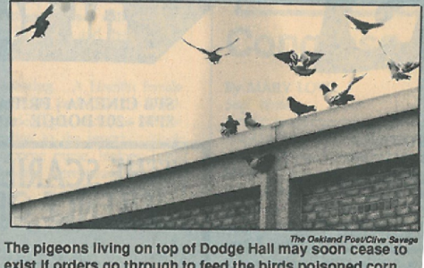Looking Back: The plight of the pigeons