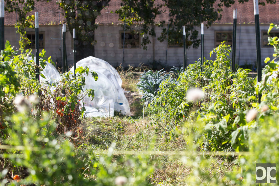 The+farmers+grow+6%2C000+and+10%2C000+pounds+of+food+a+year.
