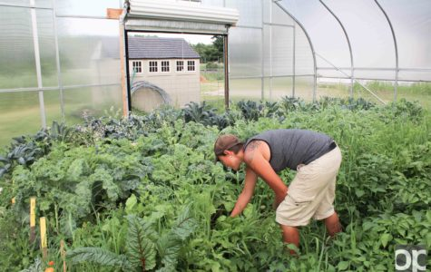 Organic farm thrives in spite of rumors