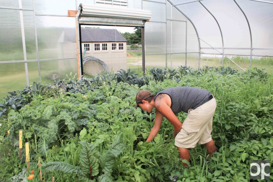 The student organic farm stand sells produce Thursdays 10 a.m. – 1 p.m. on campus.