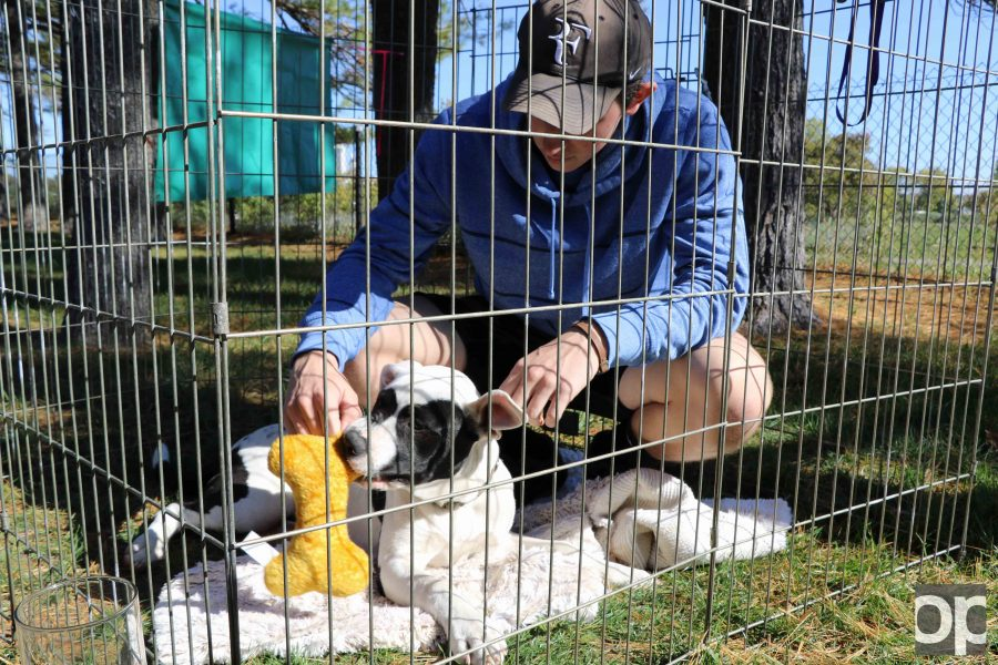 The purpose of the fraternity-sponsored event was to raise money for the The Canine Companion Rescue Center, promote the cause of rescuing animals, and persuade people to adopt dogs in need of a home.