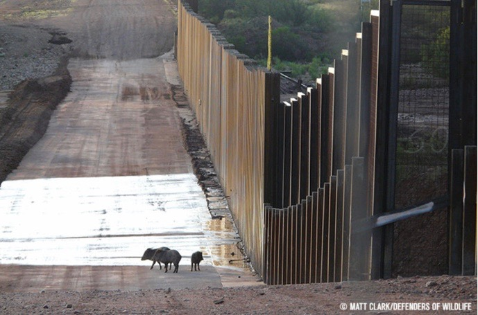 """Experts call Mexican border wall a """"crime against biodiversity"""""""