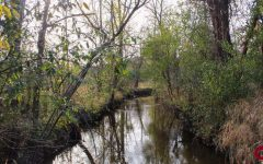 The root of protecting Oakland's nature