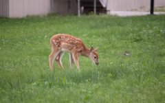 Unprotected wildlife on campus threatened by prospective development