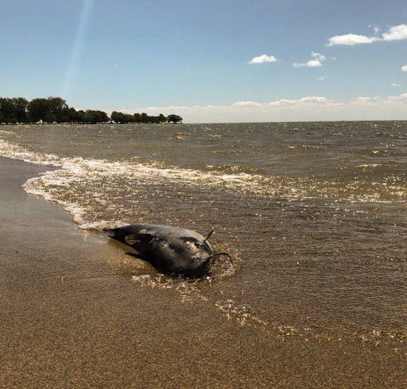 Summertime sewage creates problems for Lake St  Clair – The