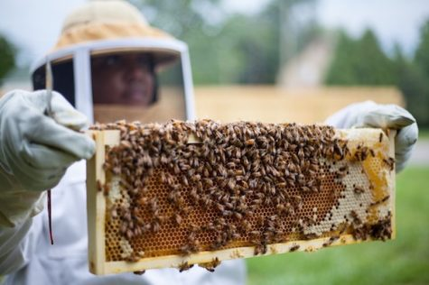 Detroit Hives have all the buzz