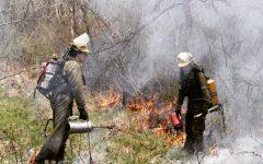 Plantwise LLC members administering the burn last Saturday.